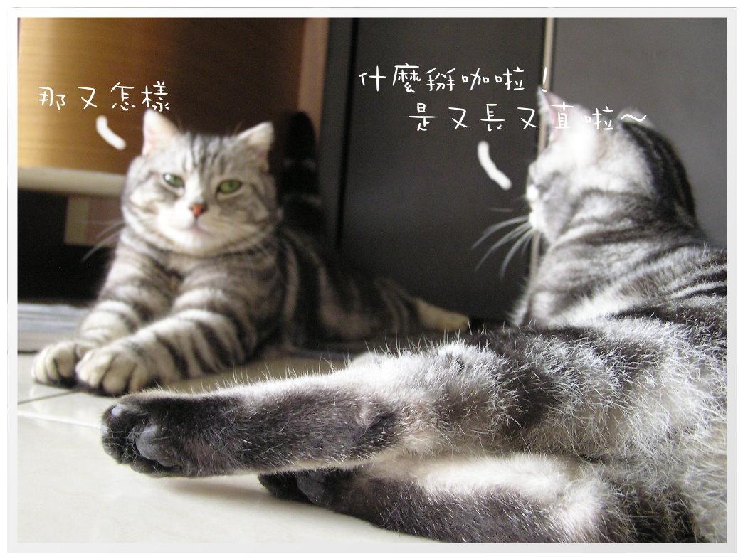 貓咪在家 (20).JPG