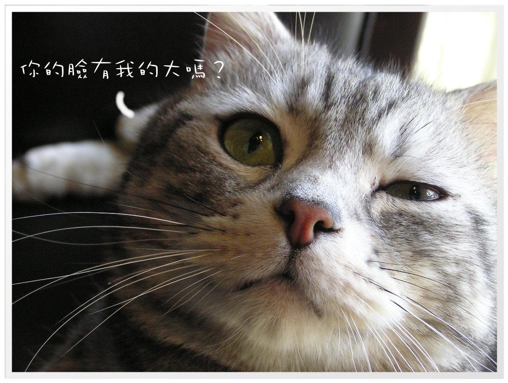 芥末奶油麵 (58).JPG