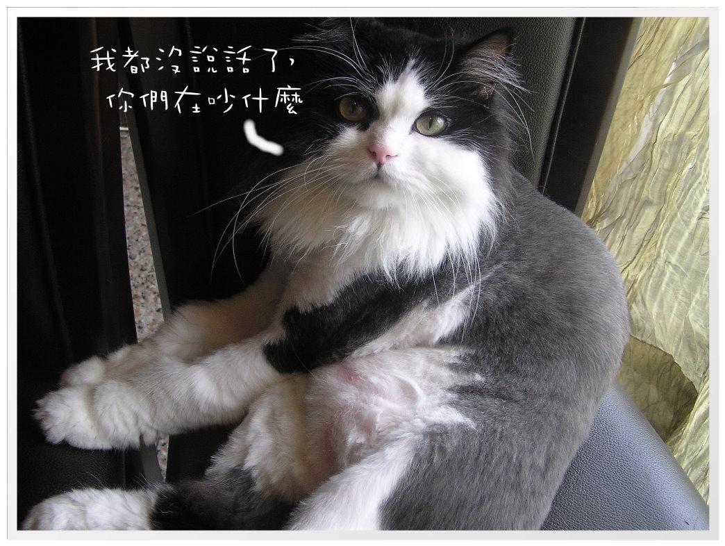 雞辣 (14).JPG