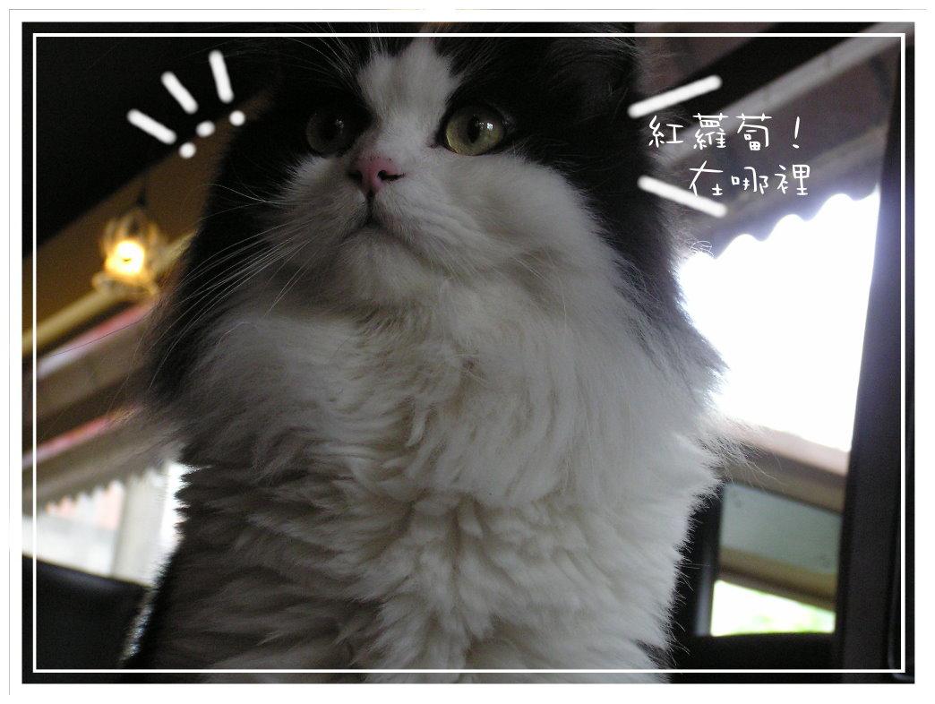 紅k和貓草棒 (47).JPG