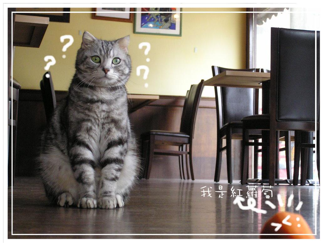 紅k和貓草棒 (43).JPG