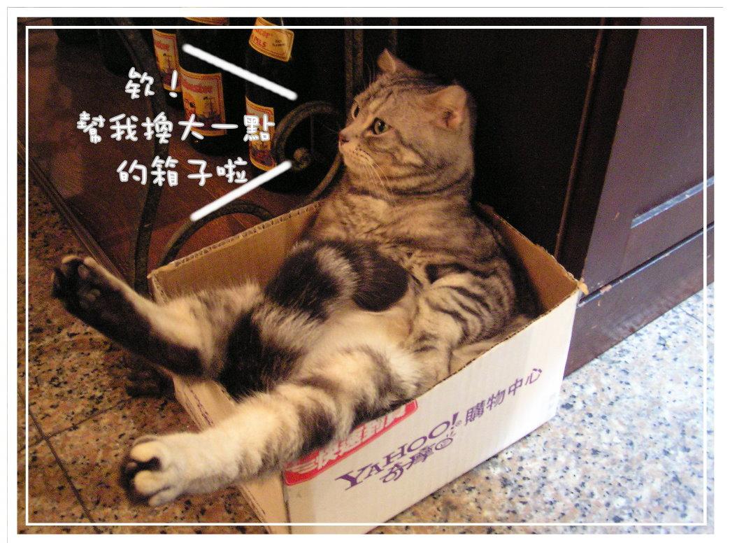 貓咪在家 (49).JPG