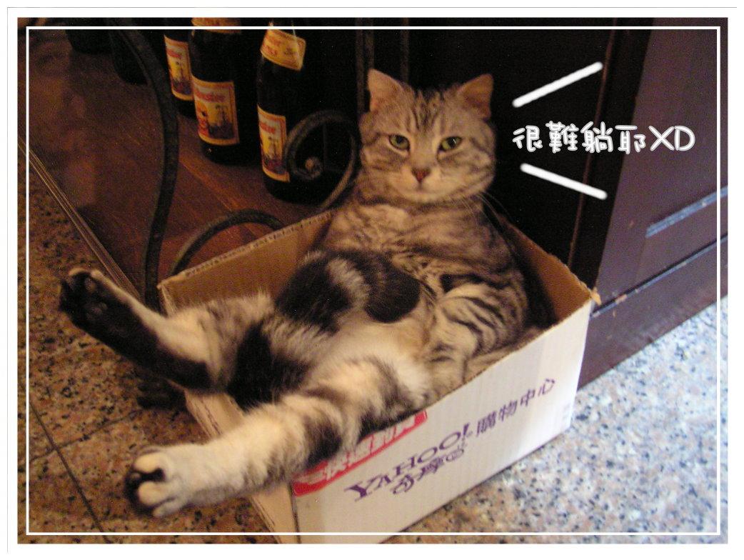 貓咪在家 (41).JPG