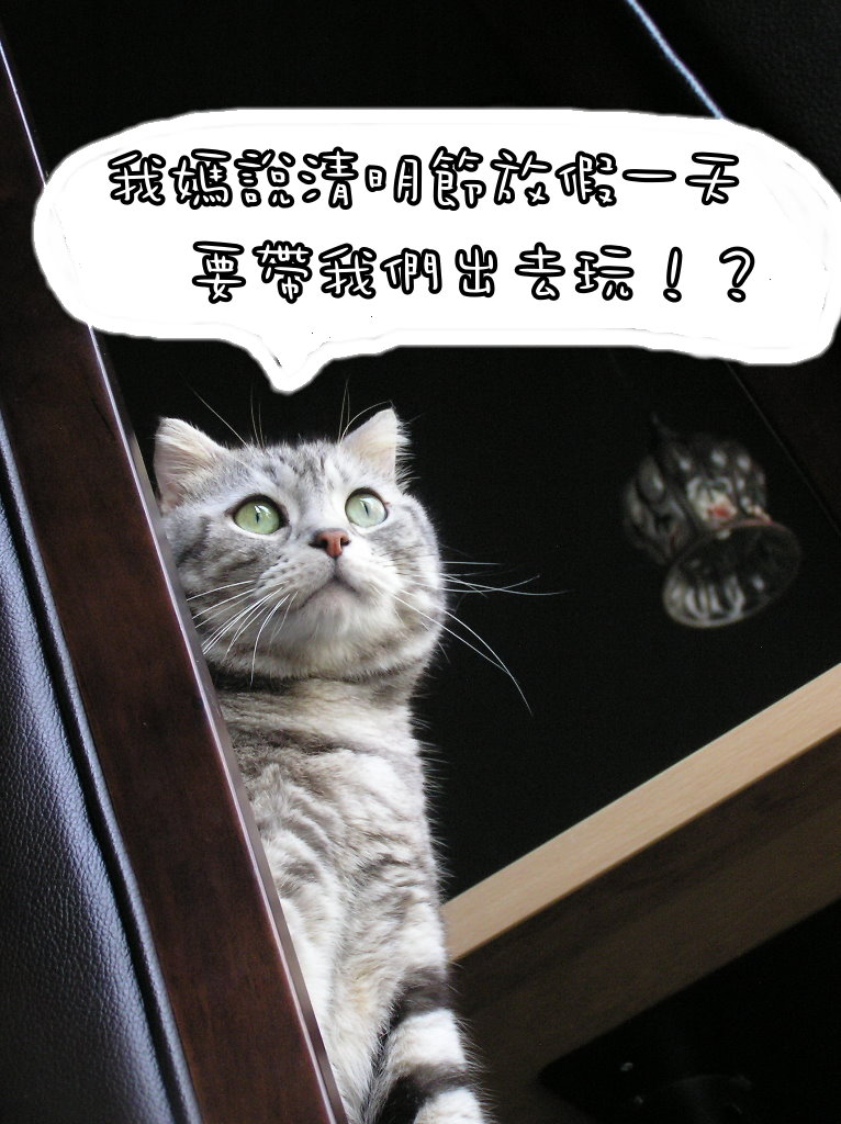 小夫餐巾紙 (6).jpg