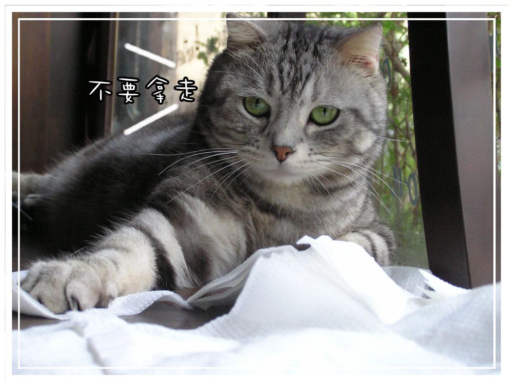小夫餐巾紙 3.JPG