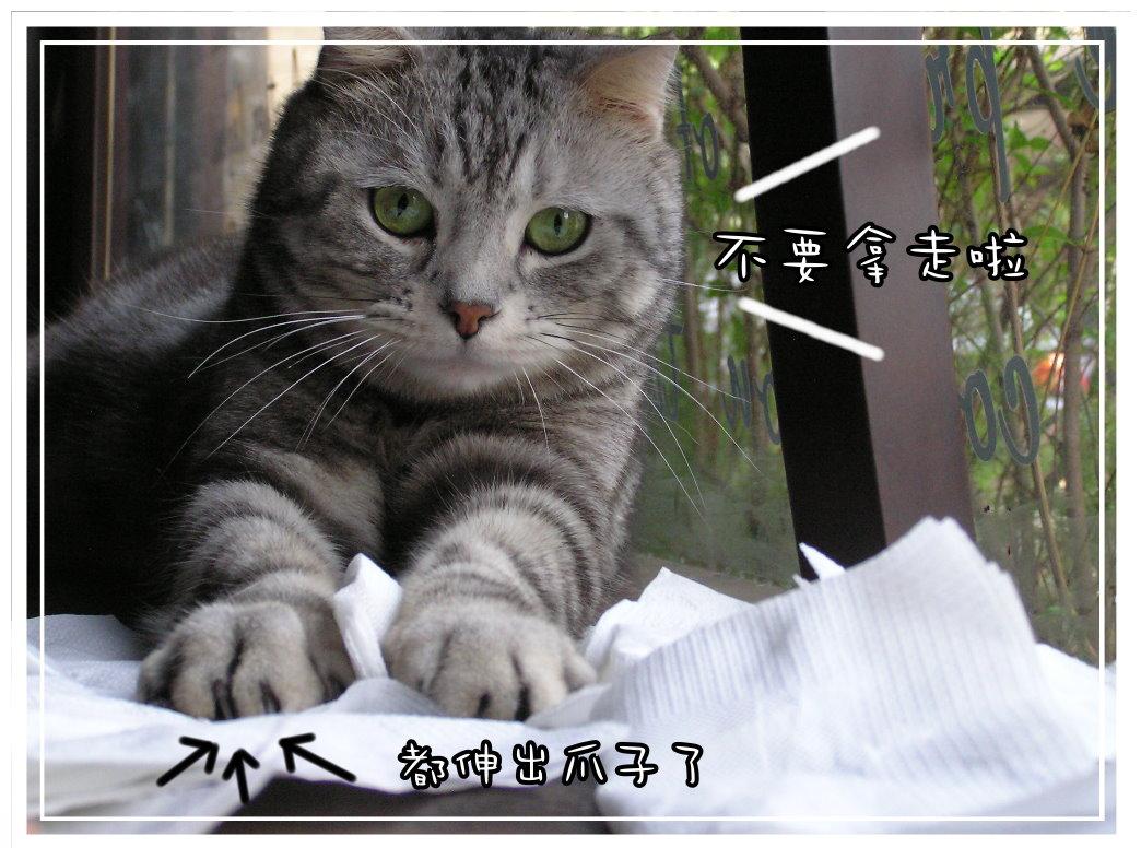 小夫餐巾紙4.JPG