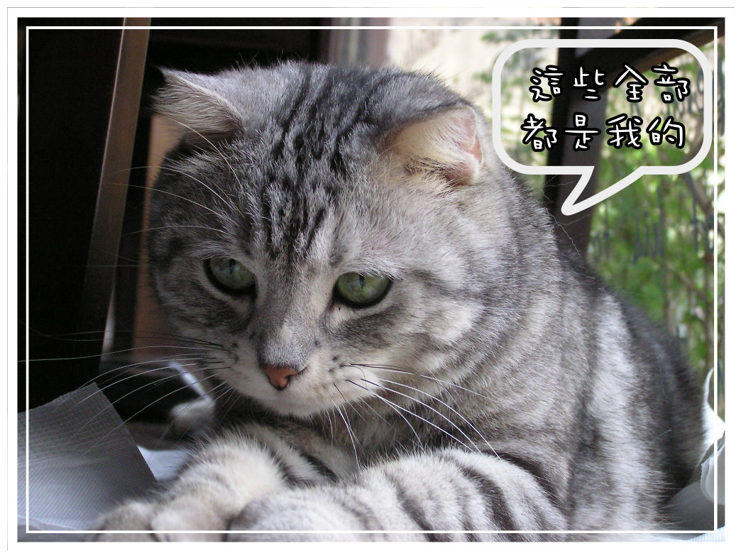 小夫餐巾紙5.JPG
