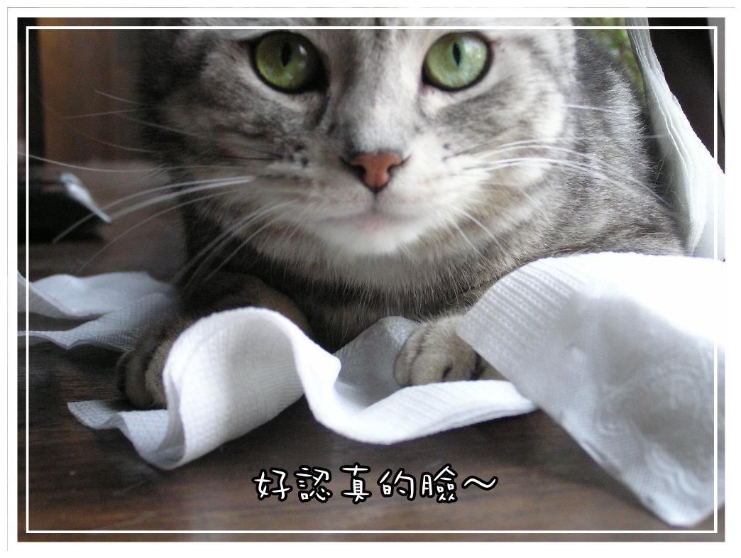 小夫餐巾紙7.JPG