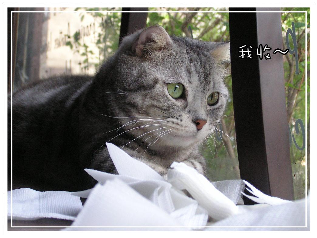小夫餐巾紙8.JPG