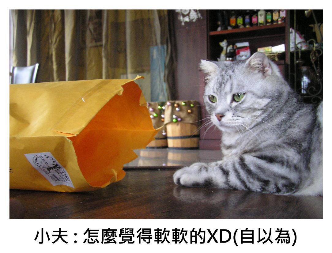 小夫紙袋1.JPG