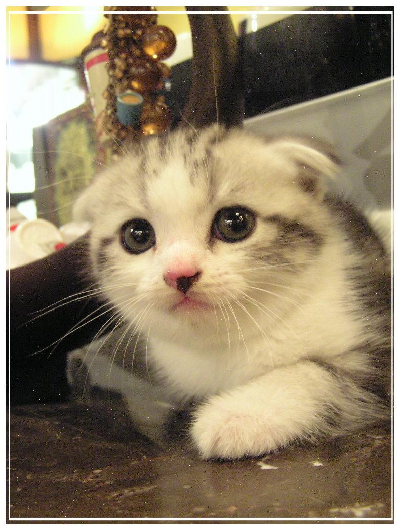 小貓3.jpg