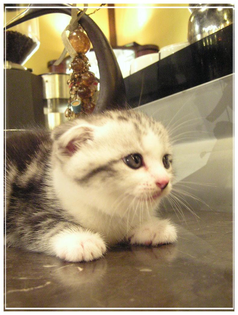 小貓4.jpg