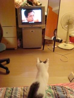 很認真看電視的恰恰.JPG