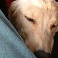 好累!好累!!