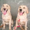 Yuki&Dolly