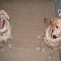 Casper&Dolly