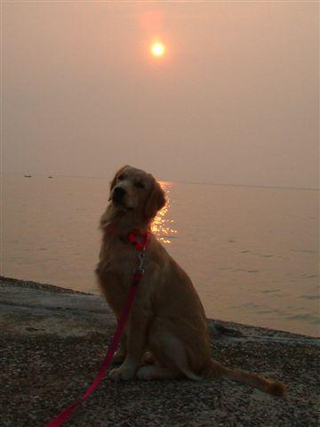 美麗的夕陽~