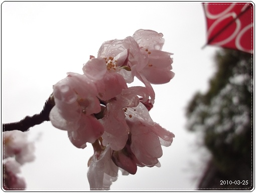 20100325-059.jpg