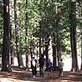 Camping - 2009 034