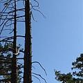 Camping - 2009 039