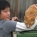 Darrel mowing and Cats 017.JPG