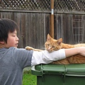 Darrel mowing and Cats 015.JPG