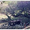 綠葉方舟(步道-1)