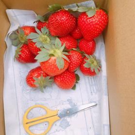 台南草莓園