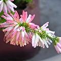 flower-2734713_640.jpg