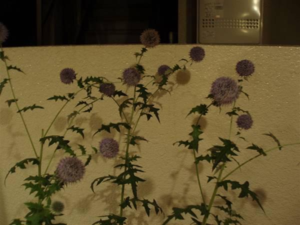 外面的奇妙植物