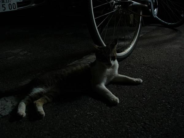 沒有照到ATOM(他在睡覺),不過有喵喵喵