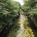 早稻田站附近一條很微妙的溪.....