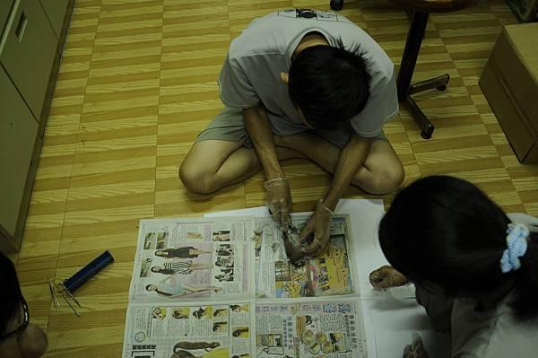 太極鷹王在解剖