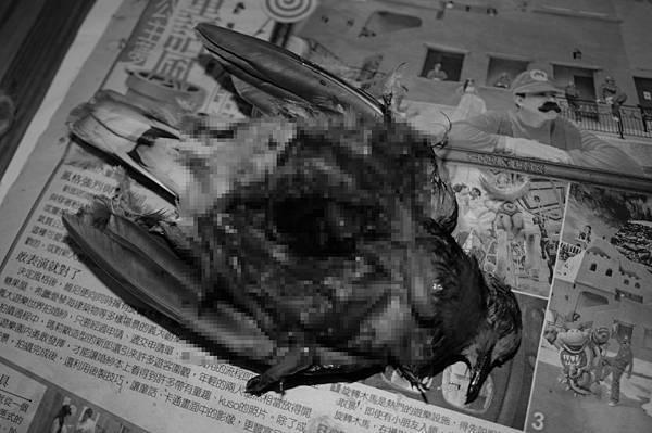 死亡的紅鳩解剖馬賽克
