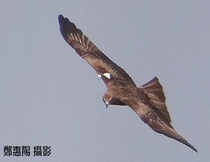 白小六 攝影鄭惠陽 2013.10.31