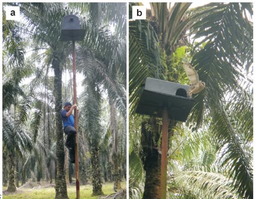 馬來西亞倉鴞巢箱.jpg