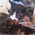 三隻小貓.jpg