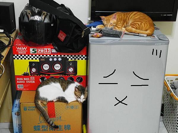 貓貓在冰箱旁休息