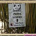 PANDA VEWING