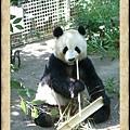 PaNdA!!熊貓?貓熊?