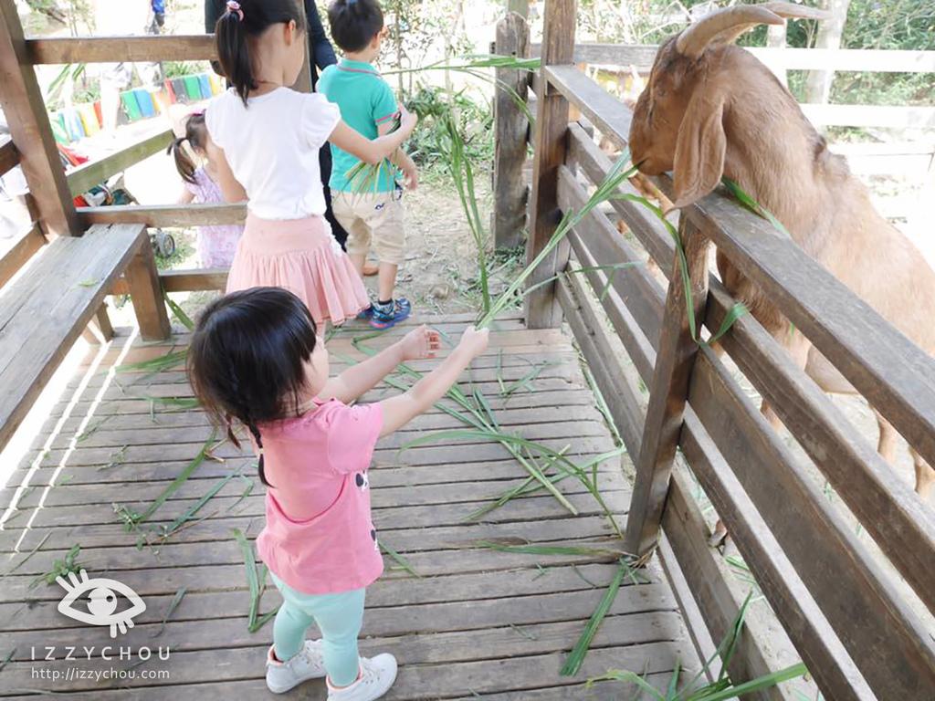羊世界教學休閒牧場2.jpg