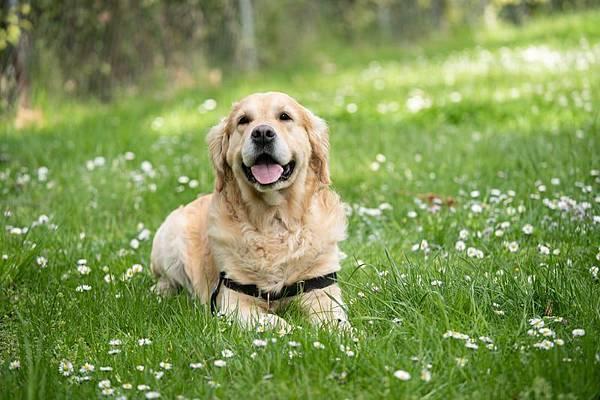 人工智慧最佳教練居然是狗狗,你聽說過嗎(下)