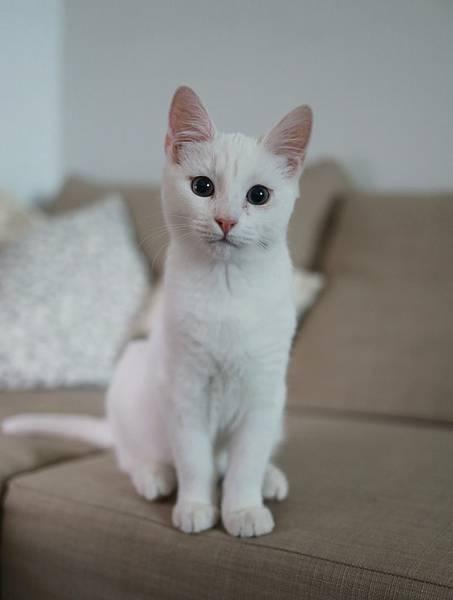 人工智慧貓砂盆:2.利用大便判斷愛貓健康狀況