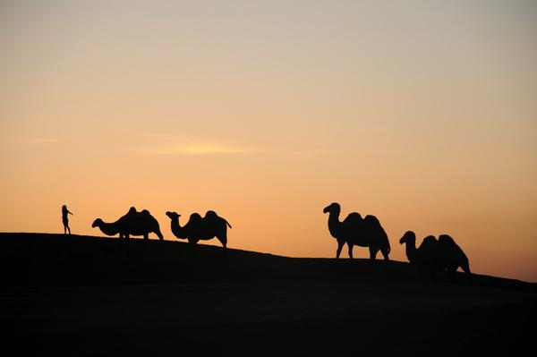 絲路的駱駝.jpg