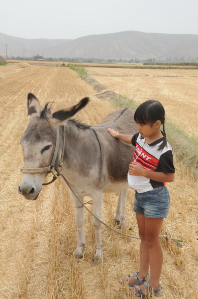 農家樂-我有一隻小毛驢.jpg