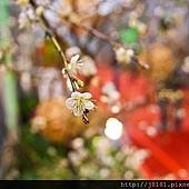 16-01-2011070.jpg