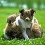 normal_Dog_10.jpg