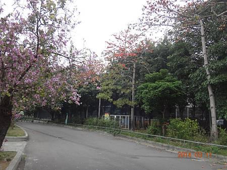 春天5.JPG