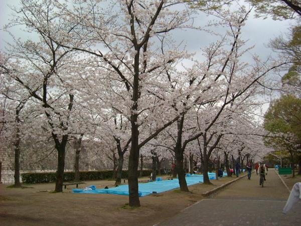 大阪公園 (1).JPG