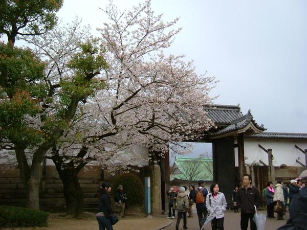 大阪公園 (9).JPG